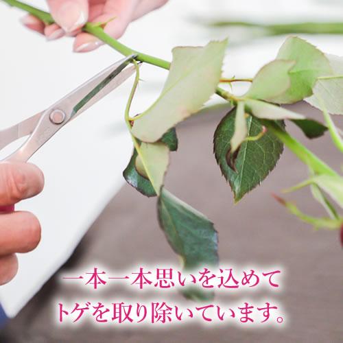 【ダズンローズ】生花バラ12本の花束 プロポーズの定番 メッセージローズ
