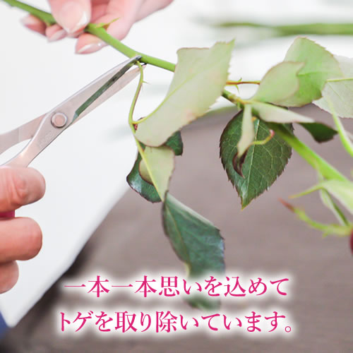 本数が選べる生花バラの花束 メッセージローズ